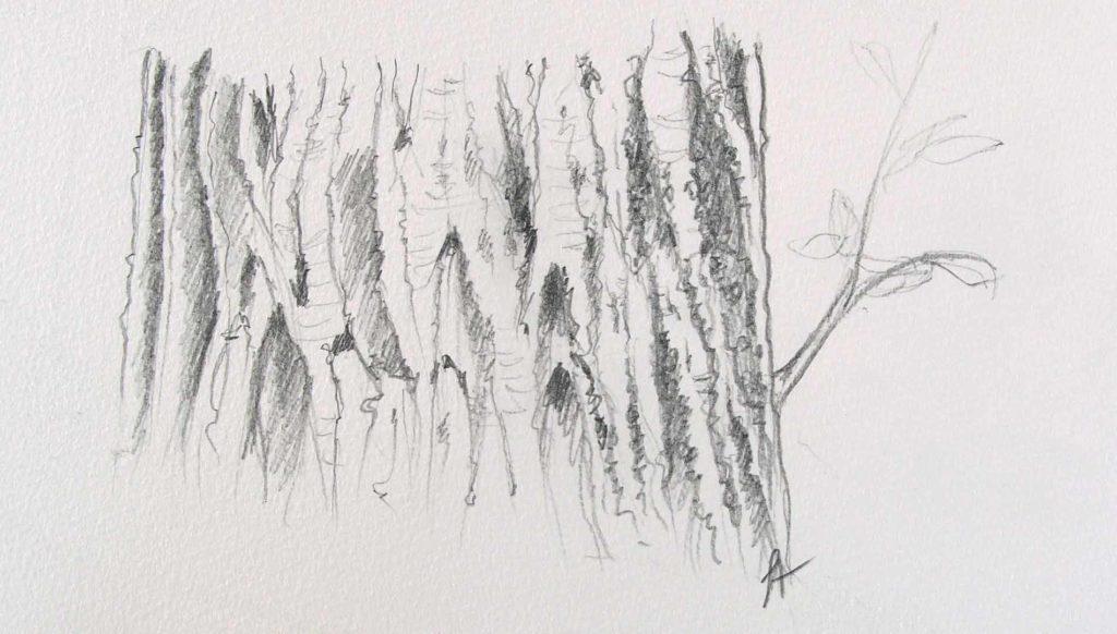 dessiner l'écorce d'un arbre formation gratuite formation en ligne dessin