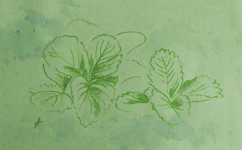 comment-dessiner-fraise-croquis-in-situ