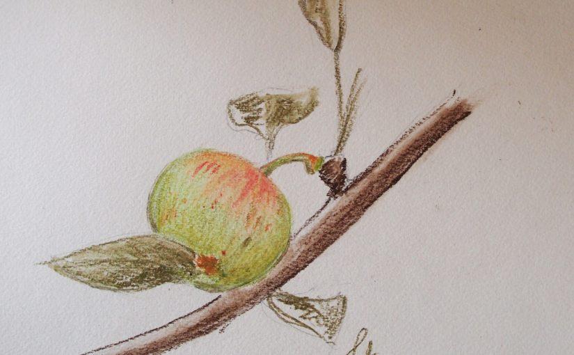 Comment dessiner un fruit ?