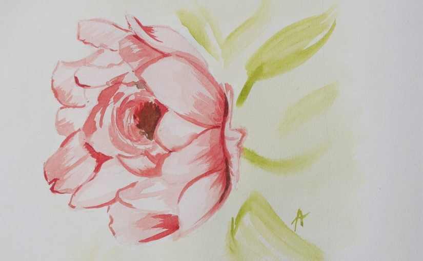 Comment dessiner une pivoine à l'aquarelle (fleur) ?