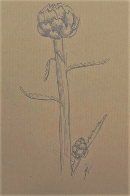 formation-dessin-florence-adam-artichaut-végétal-kraft