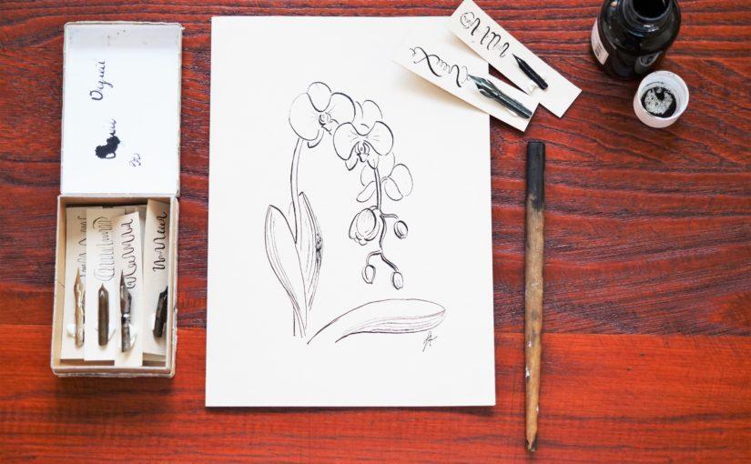 Comment dessiner une orchidée avec une plume et de l'encre de Chine ?