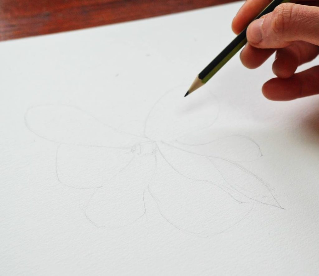 magnolia-dessin-crayon-architecture-plante